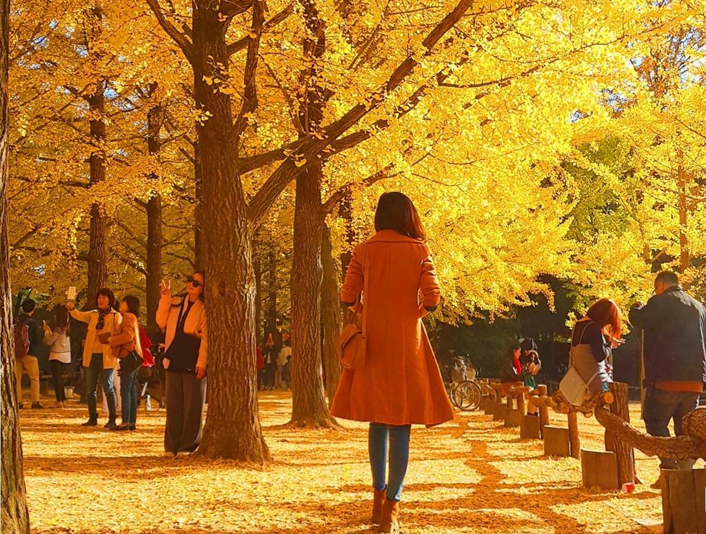 Mùa thu Hàn Quốc lá vàng